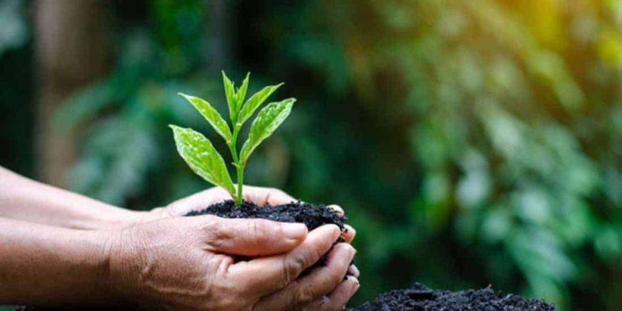 hands-trees-growing-seedlings-bokeh-green-background